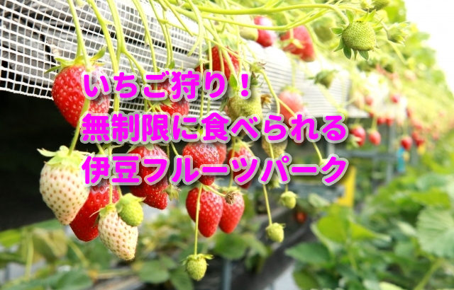 静岡県でいちご狩り!時間無制限の伊豆フルーツパーク