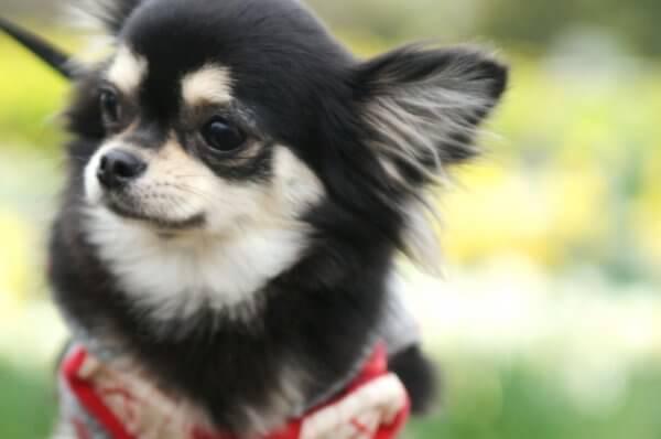 ペット不可の分譲マンションでペットを飼えるように交渉するにはどうしたらいい?
