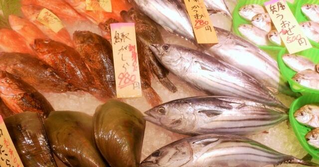 イサキのスーパーでの値段 相場は?実はお手頃価格で食べられます